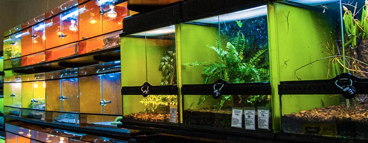 Vi säljer utvalda reptiler och amfibier i butiken